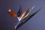 2008-2_s[1].jpg